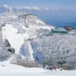 スキーとスノーボードどっちが初心者にとって簡単?それぞれの比較について